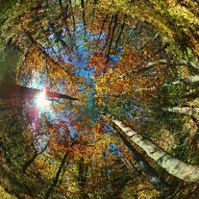 Falling leaves test #momiji3D #theta360