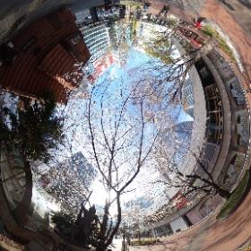 数寄屋橋跡で桜シータ #sakura3d #theta360