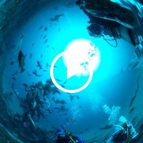 2019/03/24 南房総・伊戸 シャークタワー(1) #padi #diving #フリッパーダイブセンター #伊戸 #theta #theta_padi #theta360 #shark