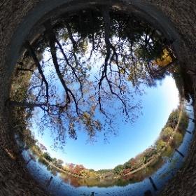 2020/12/1、善福寺公園 上の池 より #theta360