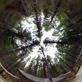 Kabania - Cabanita - Totoche (Treehouse / Cabane dans les arbres) #theta360