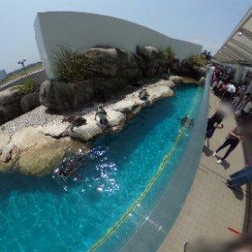 仙台の海の杜水族館のペンギンだす #theta360