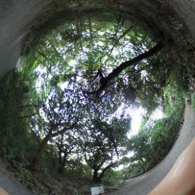 自然教育園@東京  ドイツ式カイロプラクティック逗子整体院 www.zushi-seitai,com  #theta360