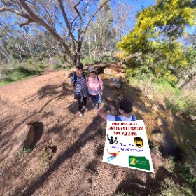 Whistlepipe Gully creek 3500m loop track in Kalamunda 138m elevation gain, fresh water ponds, waterfalls, nature n fauna https://trailsperthwa.com/WhistlepipeGully #butterfly3d #theta360