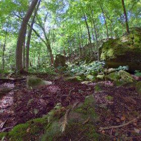 Middle of the forest #outdoors #nature #wilderness #travel #landscape #canada #theta360