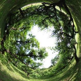 雨上がりの全生園。緑が日毎に深まります。外は蒸し暑いけど、ここだけは、涼しそう。 #雨上がり#全生園#緑一杯#草のかおり #theta360