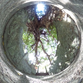 奈良尾神社 あこう樹 #theta360