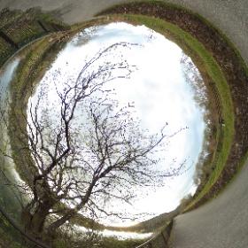 春の散歩道:芽吹き始めた新緑を眺めて #sakura3d