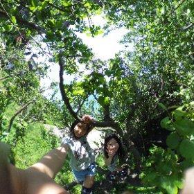 梅の木登り #theta360