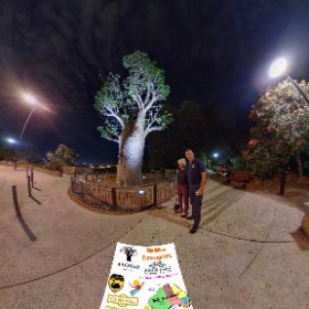 360 spherical Boab Tree (named Gija Jumulu) was transferred 3,200 kms in 2008 to Kings Park, the 750+ yr old tree is thriving at the 2 rivers lookout, SM hub https://linkfox.io/4kUQ8                #Firefly3d #theta360