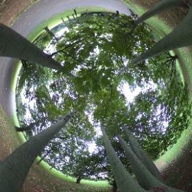 小金井公園にて