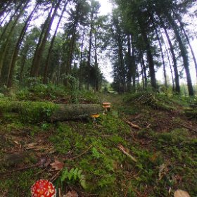 20171002_Kölliken Switzrland Mushrooms Forest #theta360