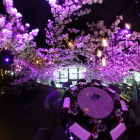 TATTU LEEDS: Take a look at the blooming spectacular blossom tree built inside the new Tattu restaurant and creating a ceiling of flowers above diners at the venue opening in East Parade, Leeds city centre on Friday, June 9, 2017. #theta360 #theta360uk
