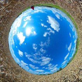 Tarwe 360 graden, 15 augustus. Wheat. #theta360
