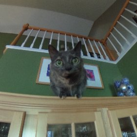 Molly the cat playing Pokemon. #theta360