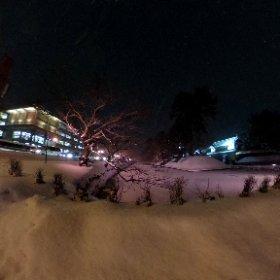 弘前 #冬に咲くさくらライトアップ 今日は気温低すぎと風のために枝の着雪はありませんでした。 #theta360