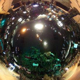 サンリオピューロランド、1Fと2Fが吹き抜けになっていて、360度パノラマ写真を撮るの楽しい。この位人が離れてればモザイクも不要な気がするし、THETA Sにおっさんが写る不都合は帽子で回避。 #theta360