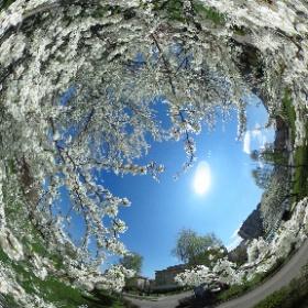 Parcul Trandafirilor, Brasov - primavara
