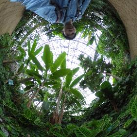 夢の島熱帯植物-Cゾーン小笠原の植物