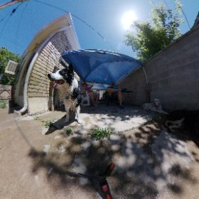 Jack (Boarder Collie) and Shadow all wet from playing in the water #theta360