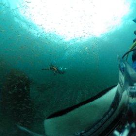 赤沢ビーチでダイビング。魚の群れに突っ込んで全天球撮影。ちょっと撮りたかった写真に近づいた。 #theta360