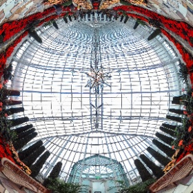 #Holiday flowers at the St. Paul Conservatory #theta360