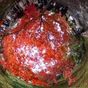 さすが京都の紅葉2016 #momiji3d #theta360