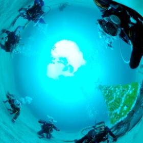 2020/11/29 伊豆海洋公園、水中クリスマスツリー #padi #diving #フリッパーダイブセンター #IOP #theta #theta_padi #theta360 #群馬 #伊勢崎 #ダイビングショップ #ダイビングスクール #ライセンス取得 #X'mas #クリスマスツリー