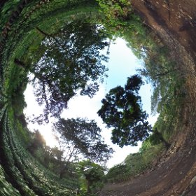 フェルナンドさんの所有する苗床。 農園から採取したコーヒー種から発芽させたコーヒーの苗木が並んでいます。 この範囲になんと75000本!!