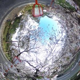 兼六園の桜 #sakura3d #theta360