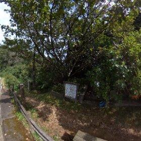 十三峠 Street View App / Video Mode 5.4K 5FPS 2of3 #theta360