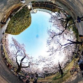 小金井公園 江戸東京たてもの園前1