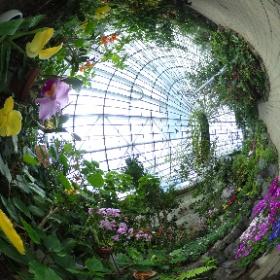 伊丹昆虫館:温室オオゴマダラ #butterfly3d