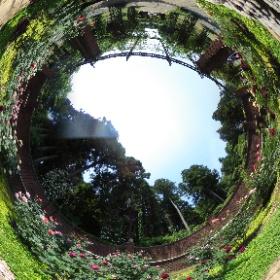 七ツ洞公園の秘密の花苑の様子です。 ※H29.5.30撮影 #theta360