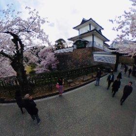 Cherry blossoms in Kanazawa Castle #sakura3d #theta360