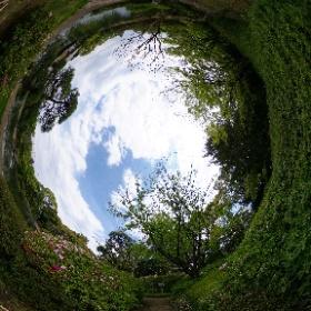 平成庭園のツツジ