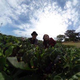 好想念濟州島的綠茶園啊!! #theta360