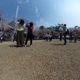 ブルーインパルスを見上げる人々2。 #弘前公園 #弘前さくらまつり #theta360