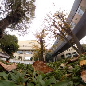秋。身近の施設の秋。植え込みに潜り込んで何をしているのだ、私はwww #momiji3d #theta360