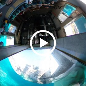 Polar Bear exibit at Hoogle Zoo, UT #theta360