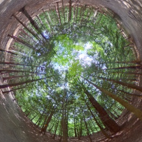 The Eternal Flame Falls trail in Chestnut Ridge Park, Orchard Park, NY.  #ErieCountyParks #theta360