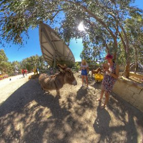 360 spherical Cohunu Koala Park in Byford West Australia, cuddle a Koala or chat with the animals as they roam the park, this is like a big family farm, SM hub https://linkfox.io/59zWX BEST HASHTAGS  #CohunuKoalaPark  #VisitPerthWa #butterfly3d #theta360