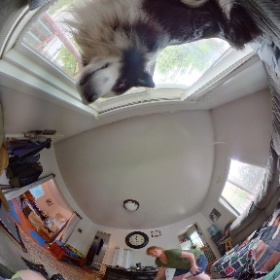 Jack is checking out the Theta V on my helment while in the house.  #theta360